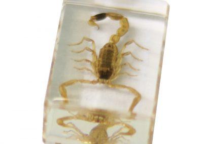 saxon_resin_preserved_insect_-_scorpion_specimen_-_sku_310211_2__2
